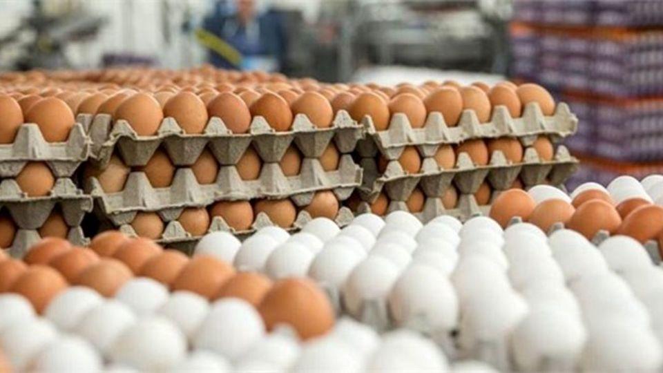 افزایش قیمت تخم مرغ در بازار (سهشنبه 27 مهر)