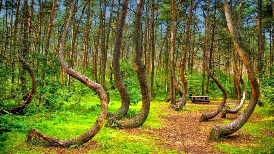 خاصترین جنگلهای ایران کدامند؟